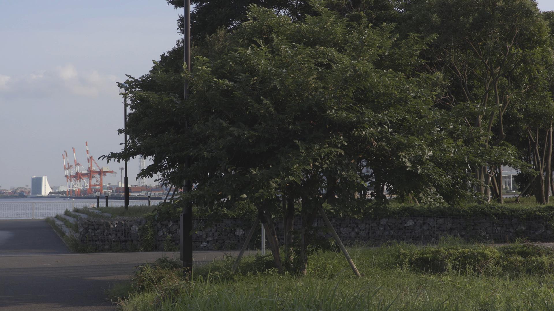 写真26 XF-AVCコーデック305Mbpsで撮影