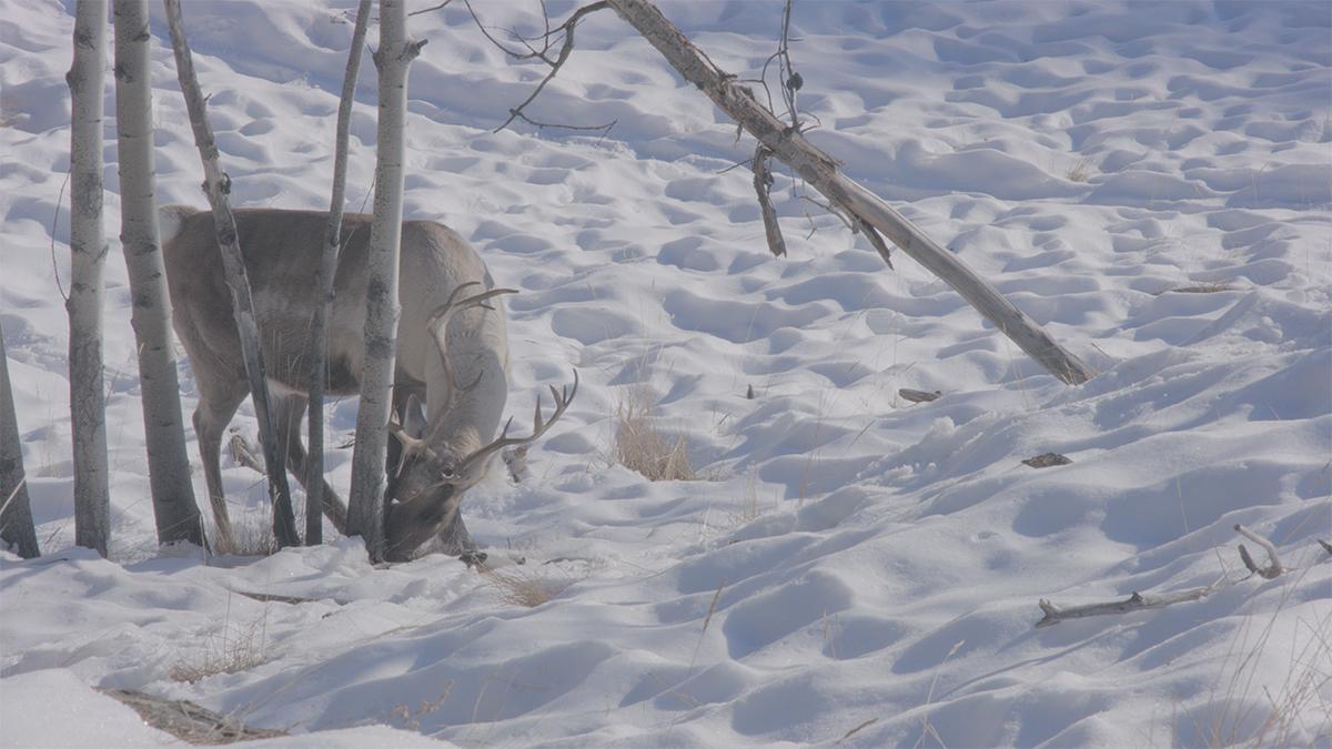 写真7 素材のからの切り抜き。雪のハイライトの部分表現がとても美しいと感じた