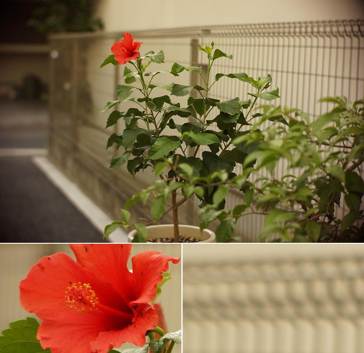 50mm_003_002_4985
