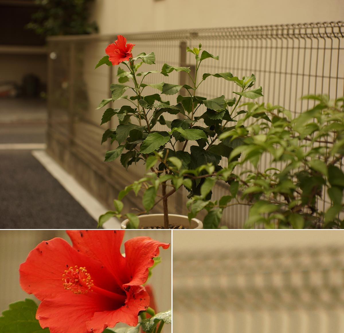 50mm_006_002_4988