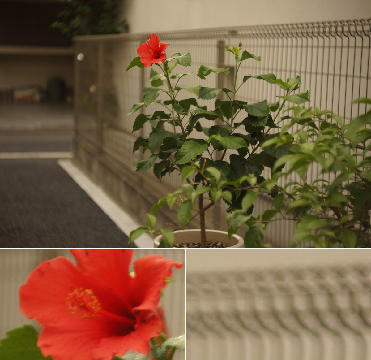 50mm_011_002_4994
